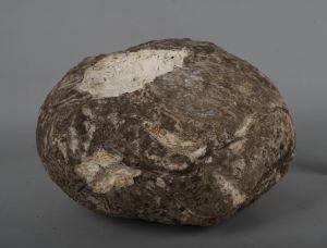 Prehistory(5)